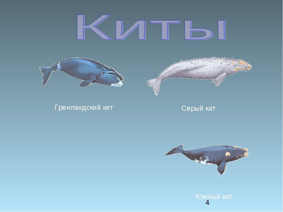 Серый кит Южный кит Гренландский кит