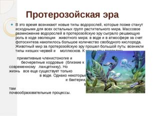 Протерозойская эра В это время возникают новые типы водорослей, которые позже