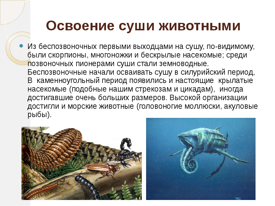 Освоение суши животными Из беспозвоночных первыми выходцами на сушу, по-видим...