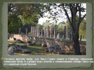 Согласно другому мифу, сын Зевса Геракл привез в Олимпию священную оливковую