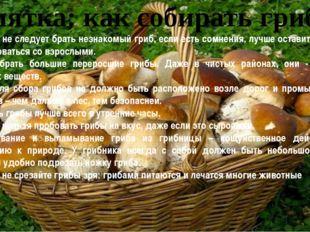 Памятка: как собирать грибы Никогда не следует брать незнакомый гриб, если ес