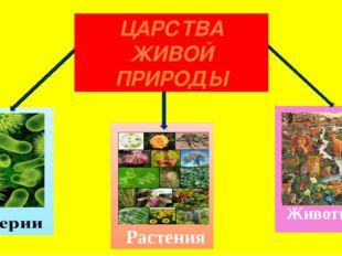 Растения Животные ЦАРСТВА ЖИВОЙ ПРИРОДЫ
