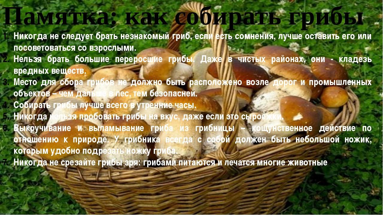 Памятка: как собирать грибы Никогда не следует брать незнакомый гриб, если ес...