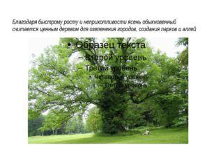 Благодаря быстрому росту и неприхотливости ясень обыкновенный считается ценн