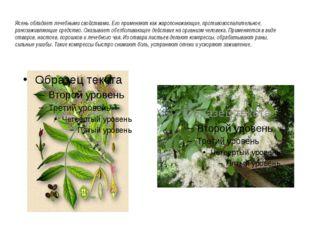 Ясень обладает лечебными свойствами. Его применяют как жаропонижающие, проти