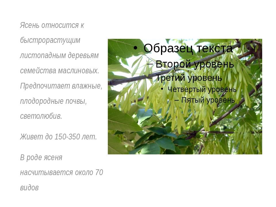 Ясень относится к быстрорастущим листопадным деревьям семейства маслиновых. П...