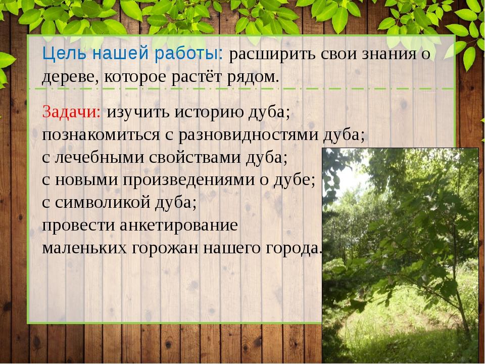 Цель нашей работы: расширить свои знания о дереве, которое растёт рядом. Зад...