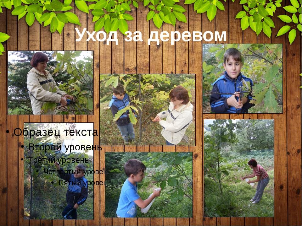 Уход за деревом