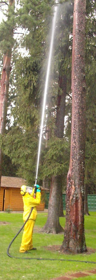http://www.forestdoctor.ru/FOTO/koroed3.jpg