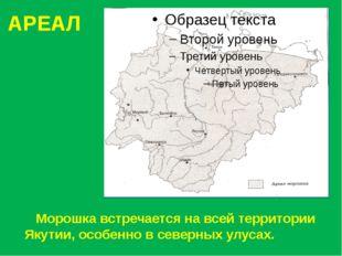 АРЕАЛ Морошка встречается на всей территории Якутии, особенно в северных улус