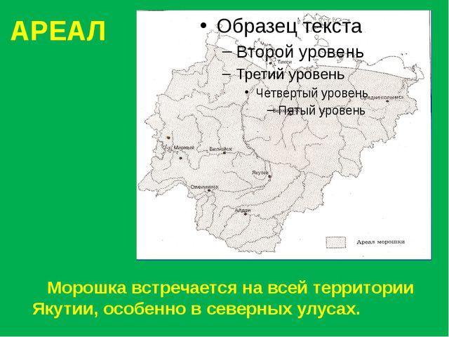 АРЕАЛ Морошка встречается на всей территории Якутии, особенно в северных улус...