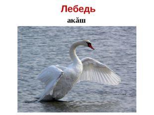 Лебедь акăш