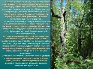 В лесах и населенных пунктах попадаются «патриархи» — деревья-великаны, возр