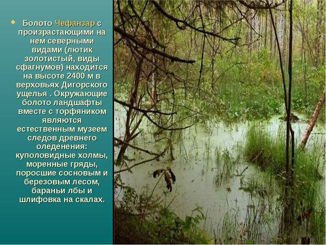 Болото Чефанзар с произрастающими на нем северными видами (лютик золотистый,...