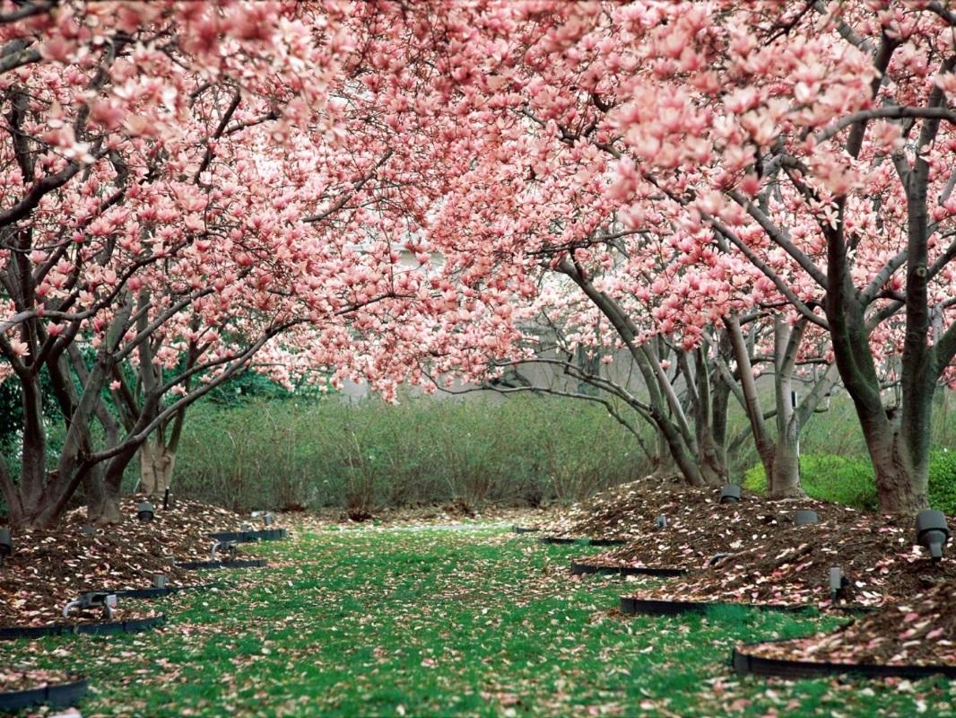 http://www.naturewallpaper.net/wallpapers/in_full_bloom_2-2048x1536.jpg