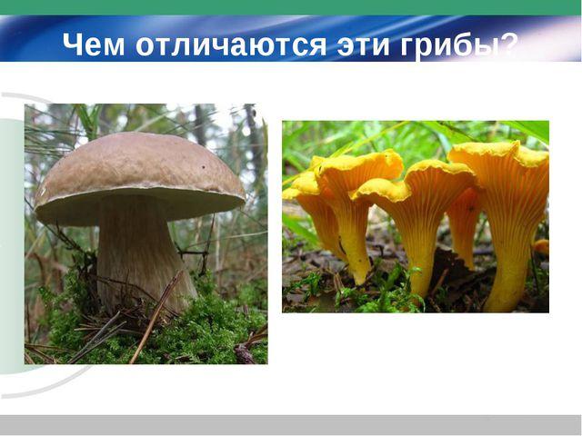 Чем отличаются эти грибы?