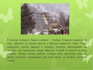 В поисках снежного барса в районе г. Эльбурс Сладков поднялся на гору, забрал
