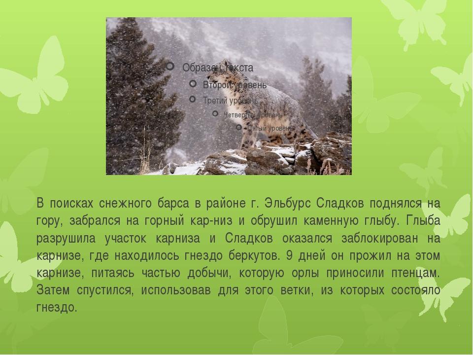В поисках снежного барса в районе г. Эльбурс Сладков поднялся на гору, забрал...