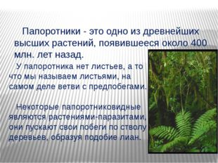 Папоротники - это одно из древнейших высших растений, появившееся около 400