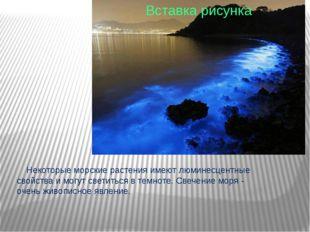 Некоторые морские растения имеют люминесцентные свойства и могут светиться в