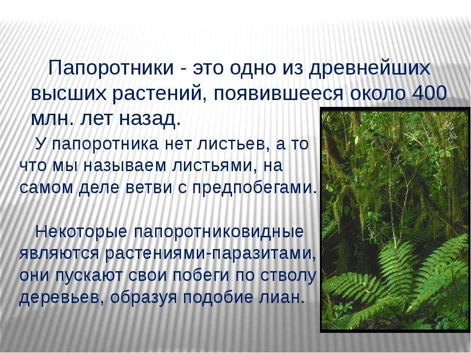 Папоротники - это одно из древнейших высших растений, появившееся около 400...
