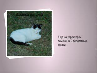Ещё на территории замечены 2 бездомные кошки.