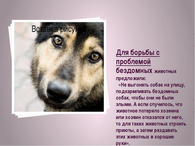 Для борьбы с проблемой бездомных животных предложили: «Не выгонять собак на у...
