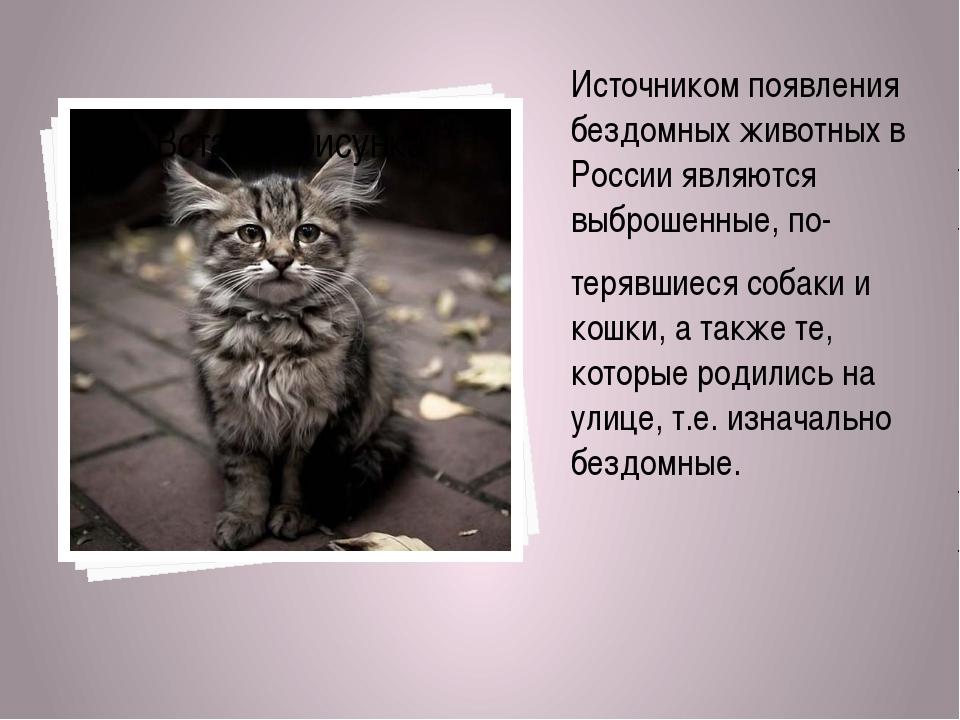 Источником появления бездомных животных в России являются выброшенные, по- те...