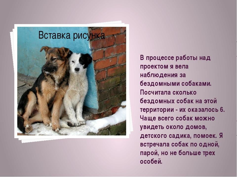 В процессе работы над проектом я вела наблюдения за бездомными собаками. Посч...