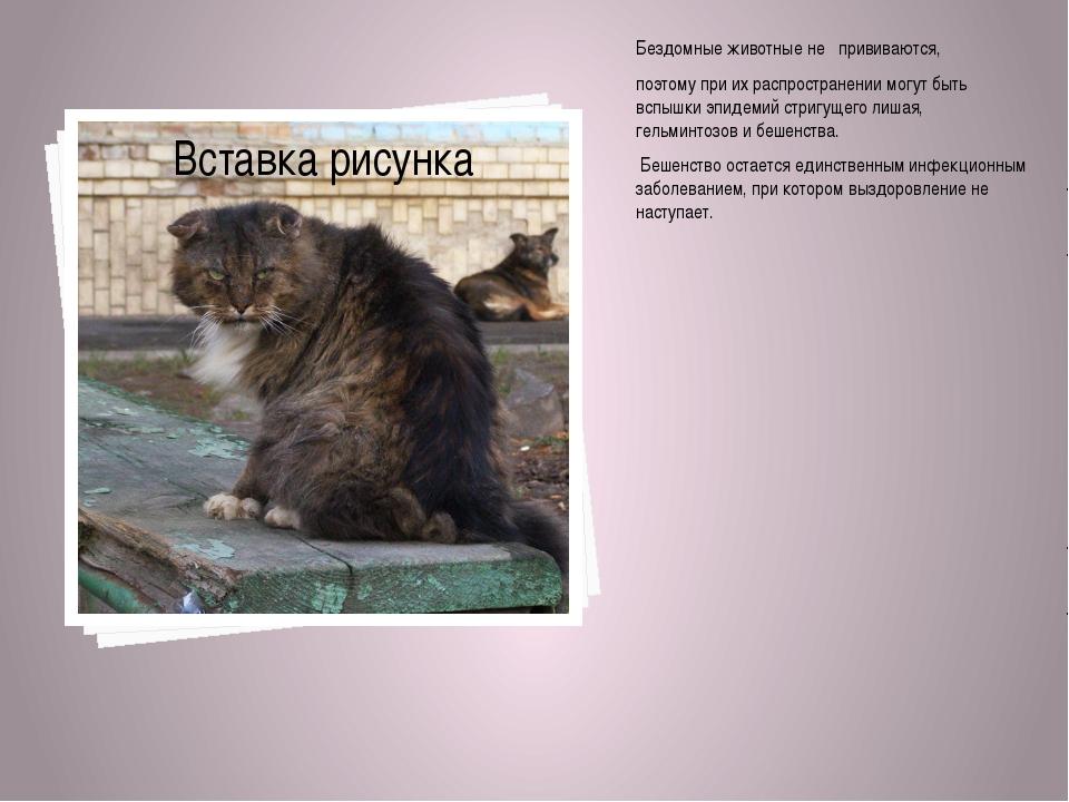 Бездомные животные не прививаются, поэтому при их распространении могут быть...