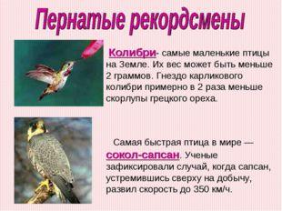 Самая быстрая птица в мире — сокол-сапсан. Ученые зафиксировали случай, когда