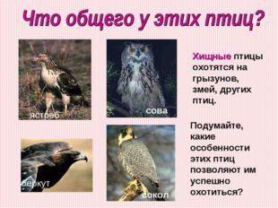 ястреб беркут сокол сова Подумайте, какие особенности этих птиц позволяют им