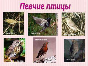 соловей скворец пеночка жаворонок дрозд малиновка