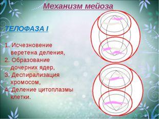 Механизм мейоза ТЕЛОФАЗА I 1. Исчезновение веретена деления, 2. Образование д