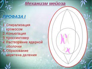 Механизм мейоза ПРОФАЗА I Спирализация хромосом Коньюгация Кроссинговер Раств