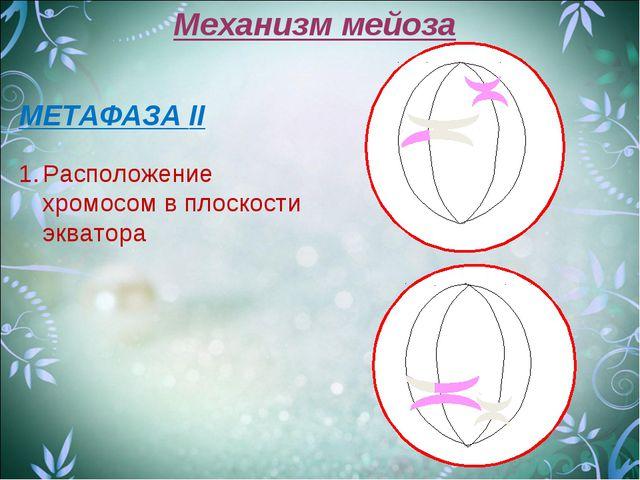 Механизм мейоза МЕТАФАЗА II Расположение хромосом в плоскости экватора
