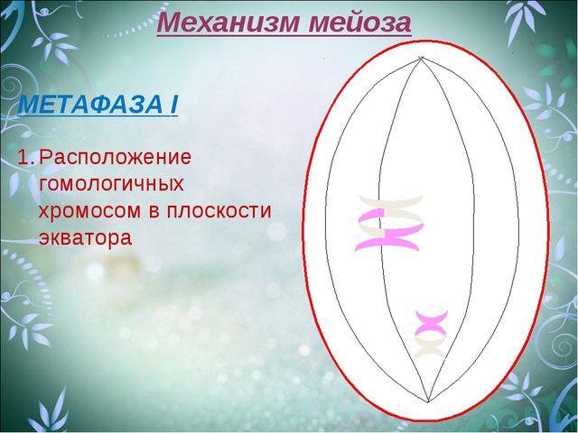 Механизм мейоза МЕТАФАЗА I Расположение гомологичных хромосом в плоскости экв...