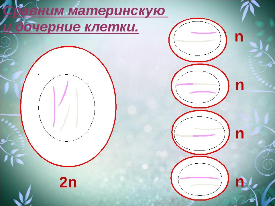 Сравним материнскую и дочерние клетки. 2n n n n n