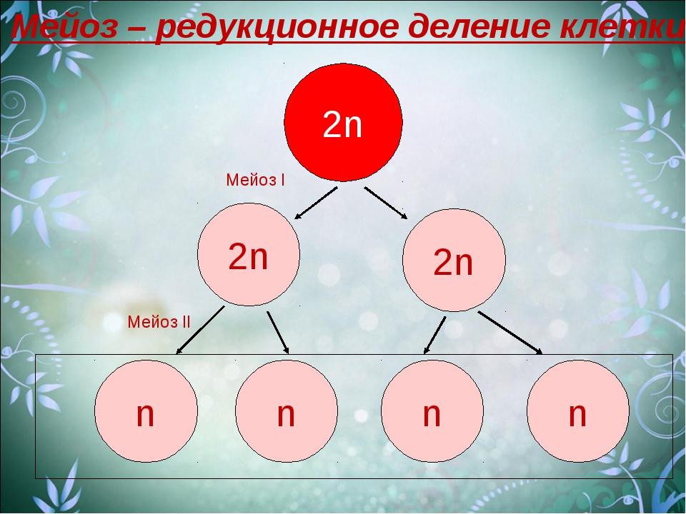 2n 2n n n 2n n n Мейоз I Мейоз II Мейоз – редукционное деление клетки