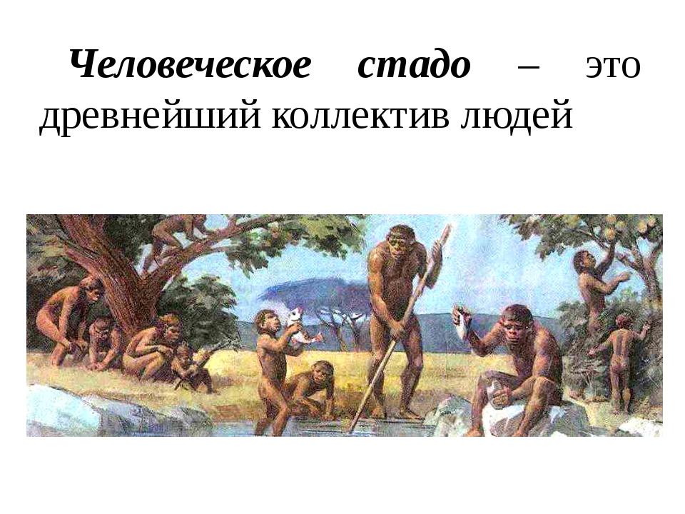Человеческое стадо – это древнейший коллектив людей
