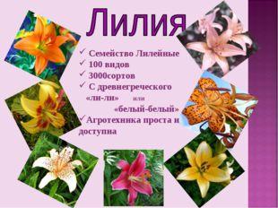 Семейство Лилейные 100 видов 3000сортов С древнегреческого «ли-ли» или «белы