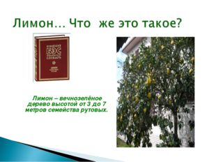 Лимон – вечнозелёное дерево высотой от 3 до 7 метров семейства рутовых.