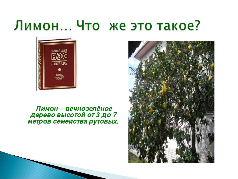 Лимон – вечнозелёное дерево высотой от 3 до 7 метров семейства рутовых. ...