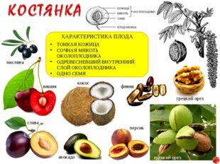 вишня слива грецкий орех кокос ХАРАКТЕРИСТИКА ПЛОДА ТОНКАЯ КОЖИЦА СОЧНАЯ МЯКО