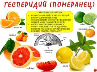 лимон апельсин мандарин грейпфрут лайм кумкват ХАРАКТЕРИСТИКА ПЛОДА НЕРАСКРЫВ