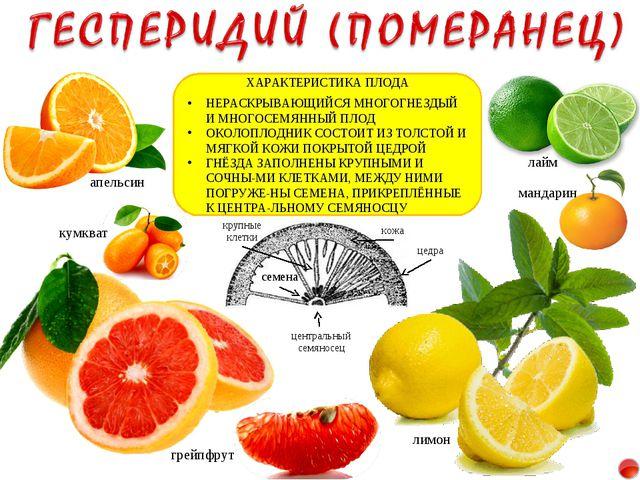 лимон апельсин мандарин грейпфрут лайм кумкват ХАРАКТЕРИСТИКА ПЛОДА НЕРАСКРЫВ...