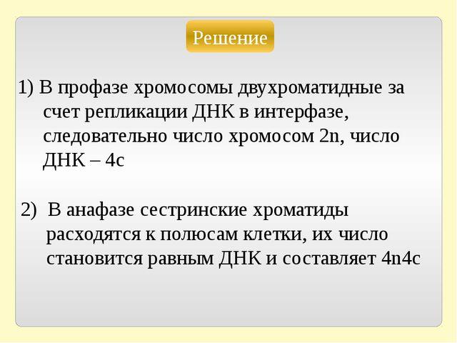 Решение 1) В профазе хромосомы двухроматидные за счет репликации ДНК в интерф...
