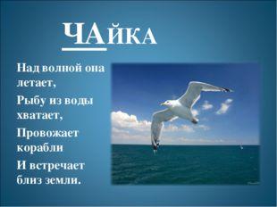 ЧАЙКА Над волной она летает, Рыбу из воды хватает, Провожает корабли И встреч