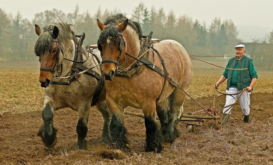 был славным сколько времени занимает работа с одной лошадью разборкой