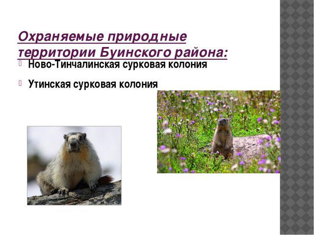Охраняемые природные территории Буинского района: Ново-Тинчалинская сурковая...